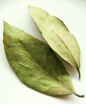 ELYTIS Hospital: Frunzele de mesteacăn detoxifică organismul