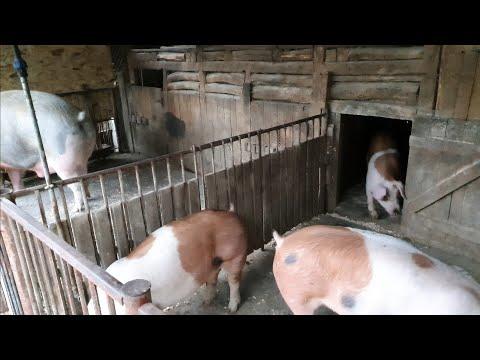 Tratament cu artroza pielii de porc Entorsă sau artrită