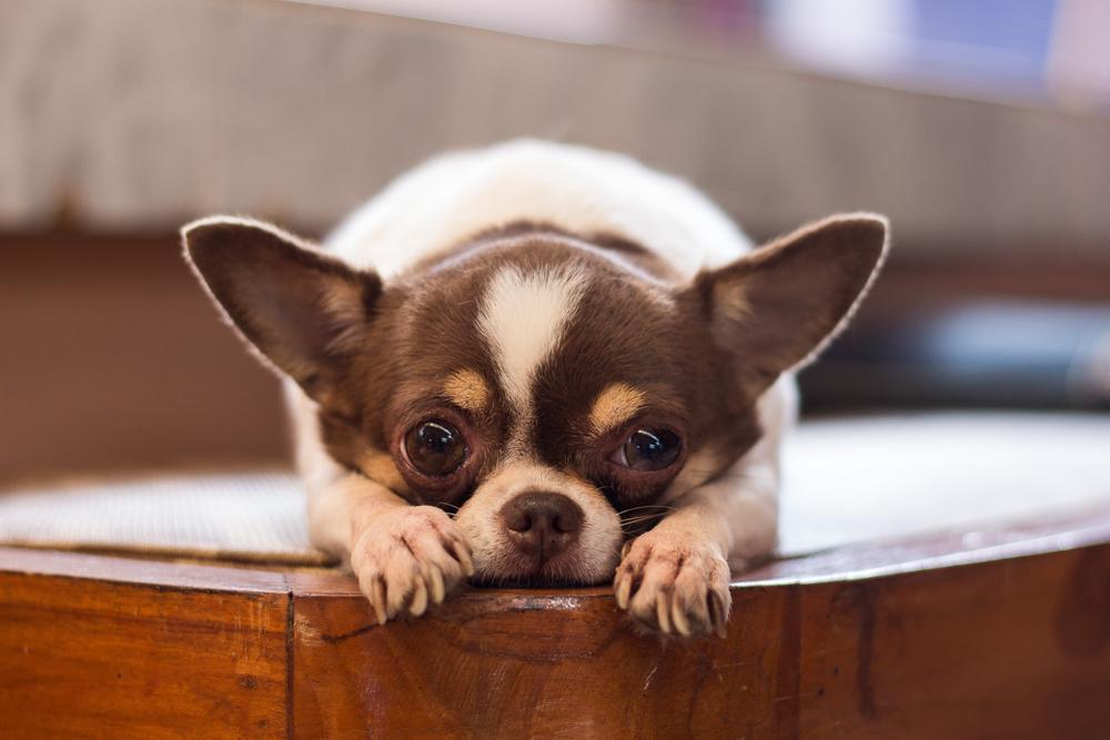 tratamentul articulațiilor părului de câine)