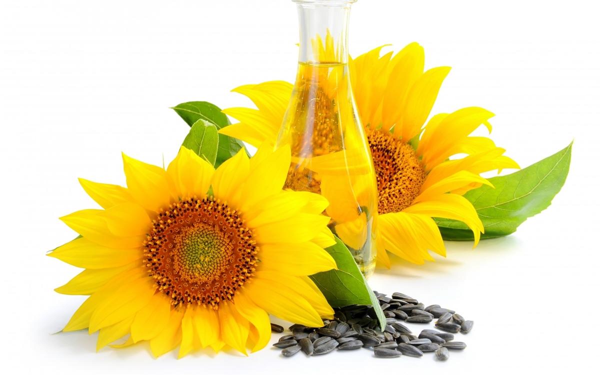 tratamentul comun al uleiului de floarea soarelui