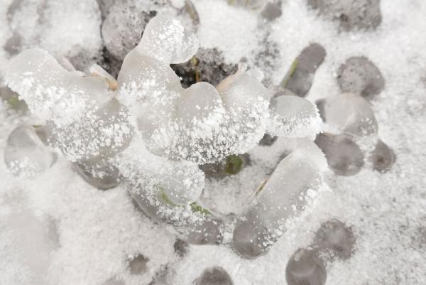 gheață de tratament comun