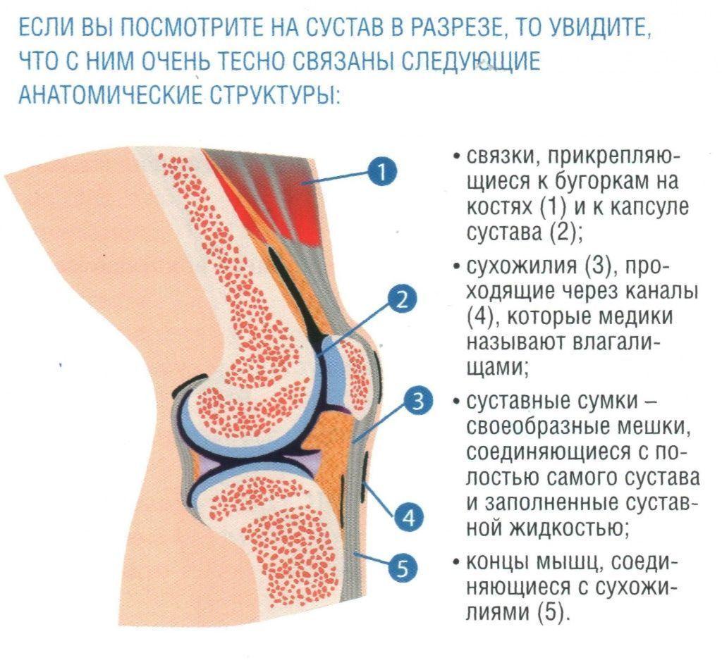 как лечить суставы аконитом)